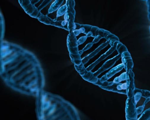 Vědci vUSA provedli první pokus o cílenou změnu DNA vtěle