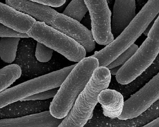 Budoucností čisté energie jsou kybernetické bakterie