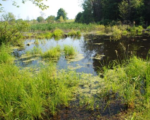 Wetland_Habitat_(6924972866)