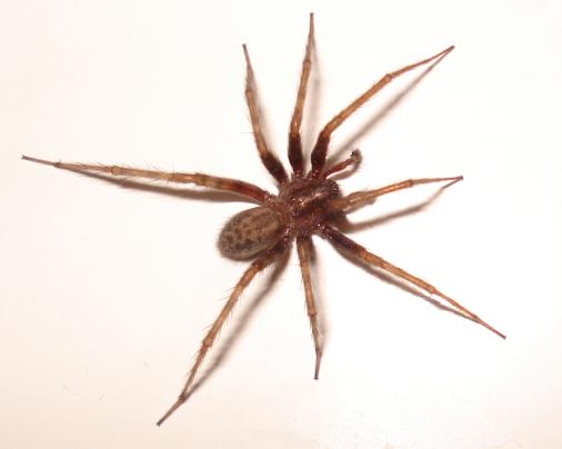 Spider-2007-10-09