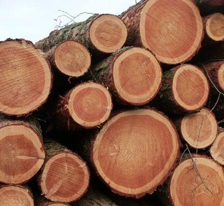 Je budoucnost ve dřevě? Vědci zněj vytvořili nečekaně odolný materiál