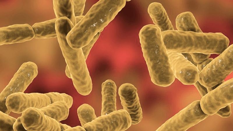 bakterie (1)