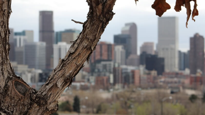 tree city urban