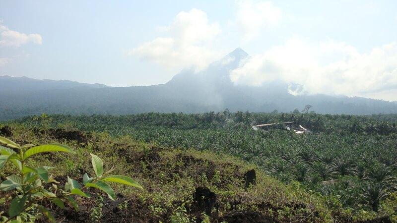 1200px-Little_Mount_Cameroon_(Etinde)